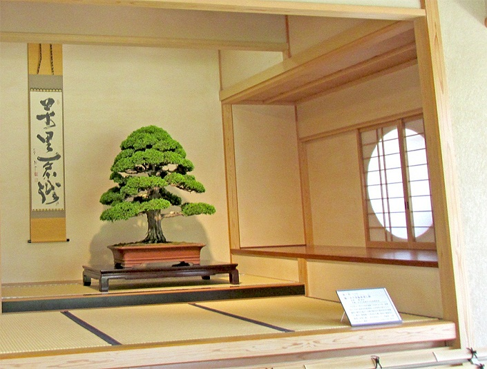 Bonsai-Japan-Bonsai-Japanische-Bonsai-05